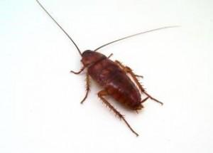 scottsdale roach